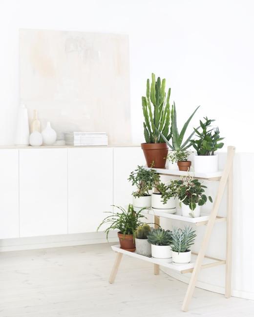 Ανοιξιάτικη Διακόσμηση με λουλούδια και φυτά
