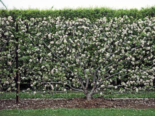 Είδη για φράχτες Κήπου18