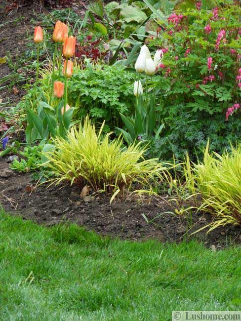 Ιδέες Σχεδιασμoύ κήπου με Τουλίπες