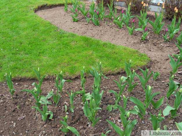 Ιδέες Σχεδιασμoύ κήπου με Τουλίπες10