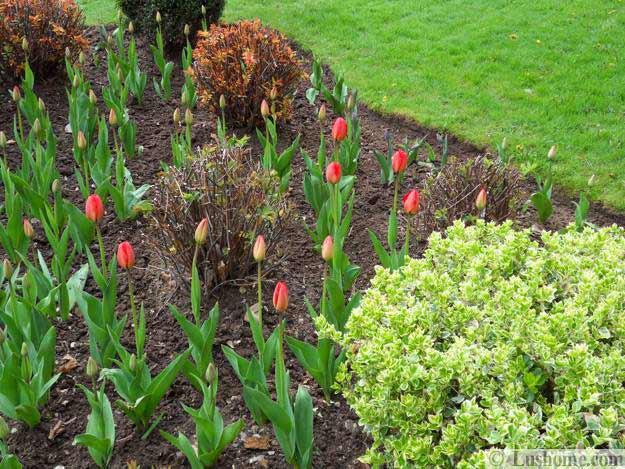 Ιδέες Σχεδιασμoύ κήπου με Τουλίπες12