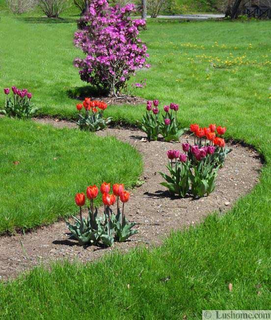 Ιδέες Σχεδιασμoύ κήπου με Τουλίπες3