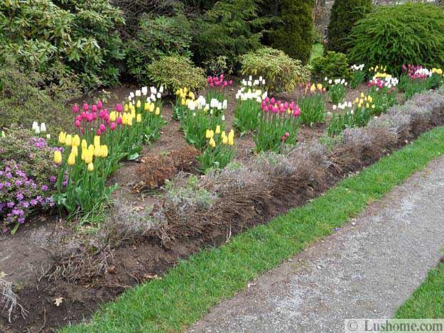 Ιδέες Σχεδιασμoύ κήπου με Τουλίπες5