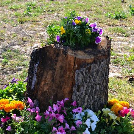 ιδέες με κορμούς δέντρου στον κήπο6