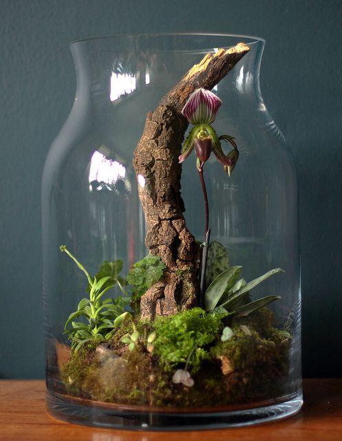 Ιδέες Εσωτερικής διακόσμησης με φυτά12