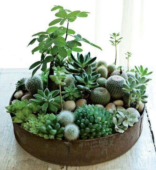 Ιδέες Εσωτερικής διακόσμησης με φυτά14