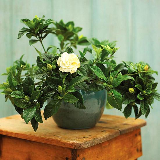 Ιδέες Εσωτερικής διακόσμησης με φυτά25