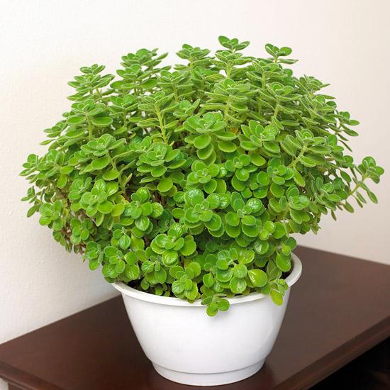 Ιδέες Εσωτερικής διακόσμησης με φυτά26
