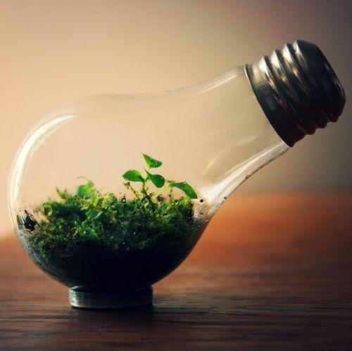 Ιδέες Εσωτερικής διακόσμησης με φυτά5