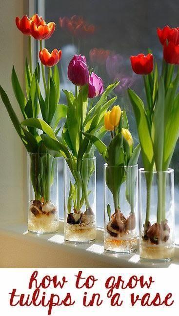 Ιδέες Εσωτερικής διακόσμησης με φυτά7