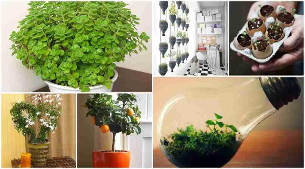 30 Απίστευτες Ιδέες Εσωτερικής διακόσμησης με φυτά