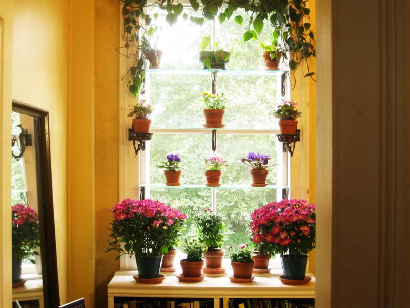 DIY Ιδέες Βότανο κήπων Παραθύρων για την κουζίνα σας15