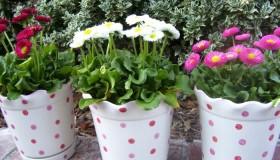 σχεδιαστικές ιδέες μπαλκονιού με φυτά8