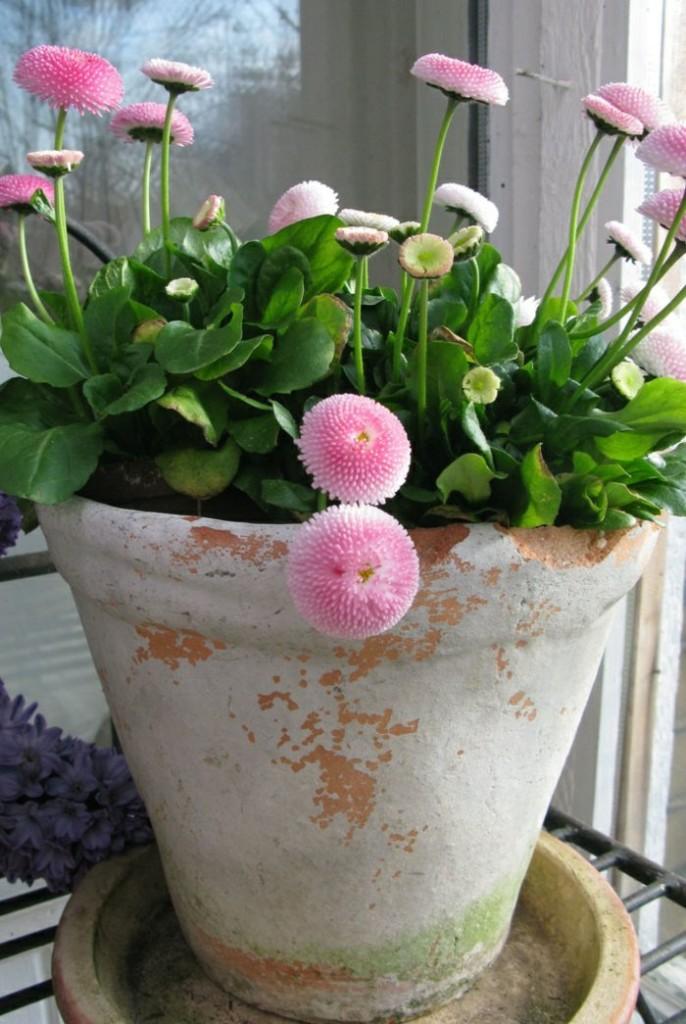 σχεδιαστικές ιδέες μπαλκονιού με φυτά9