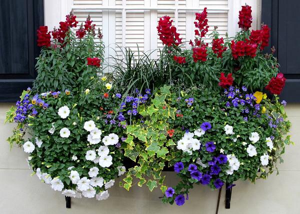 Ιδέες με ζαρτινιέρες λουλουδιών για τα παράθυρα σας1