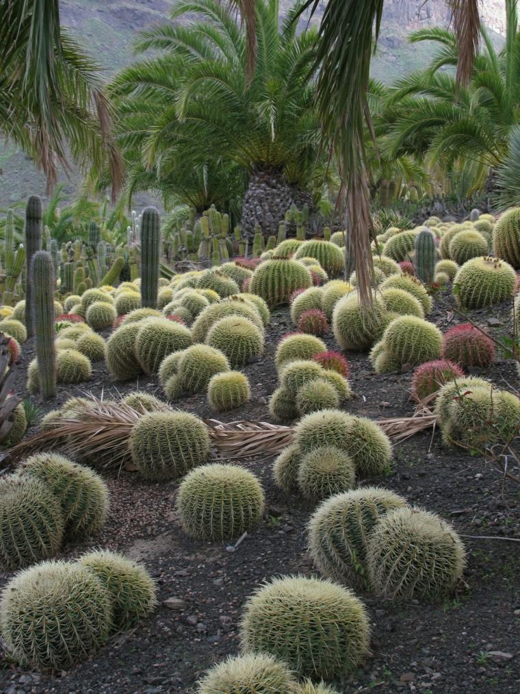 Κήποι με κάκτους11