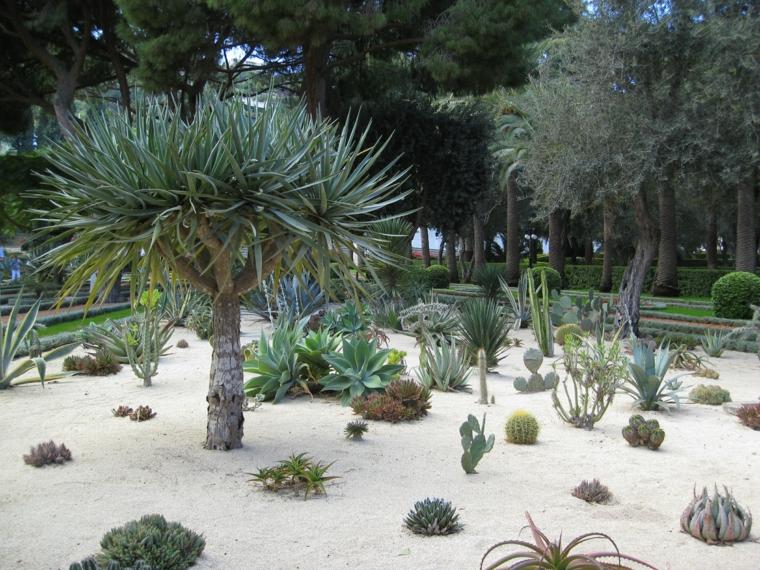 Κήποι με κάκτους43