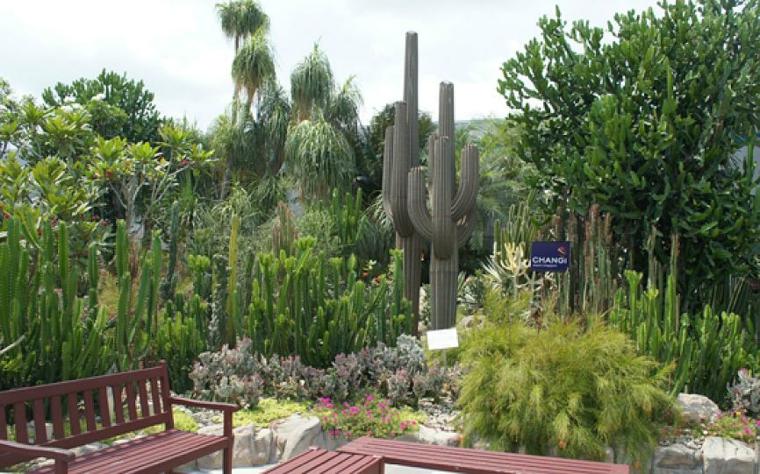 Κήποι με κάκτους47