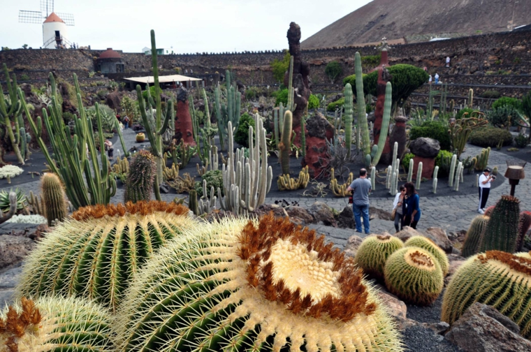 Κήποι με κάκτους50