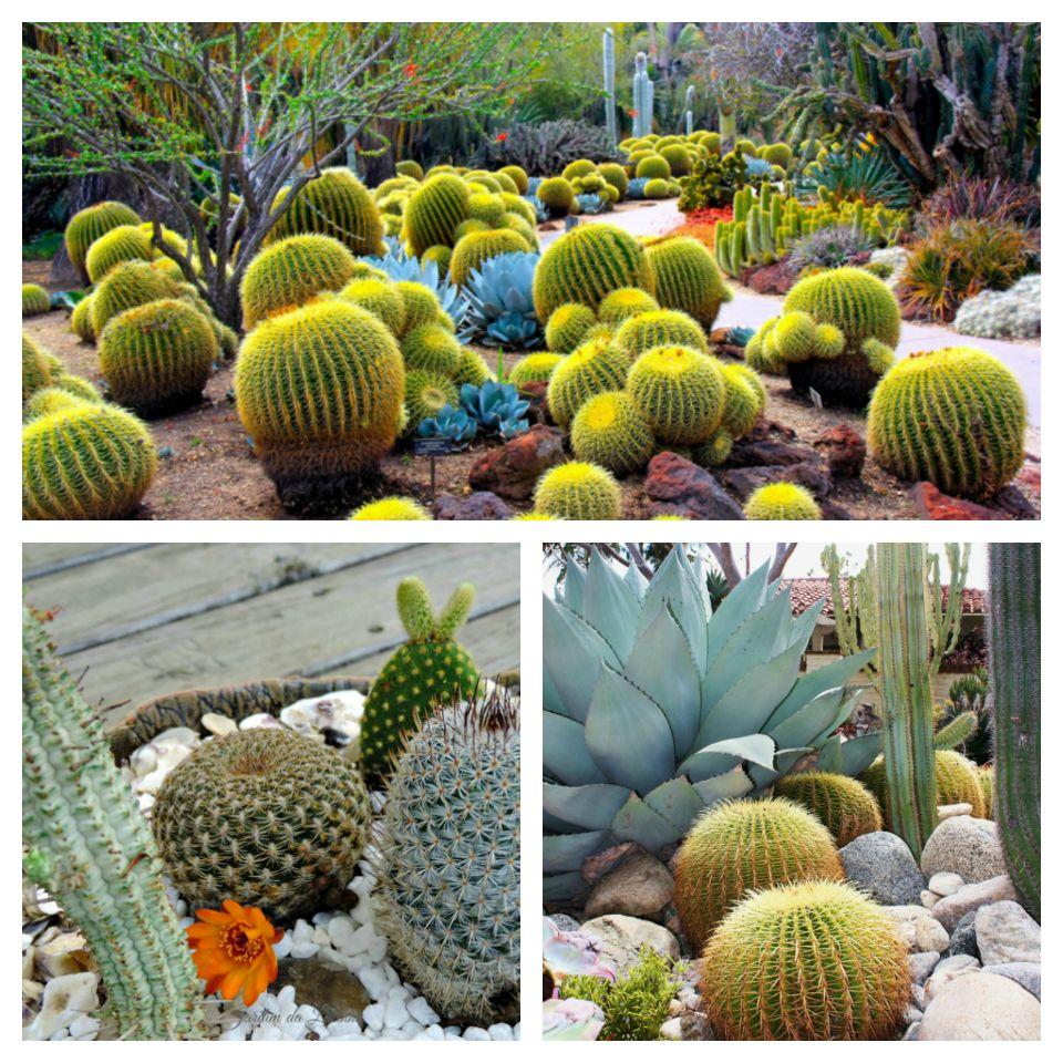 Κήποι με κάκτους51