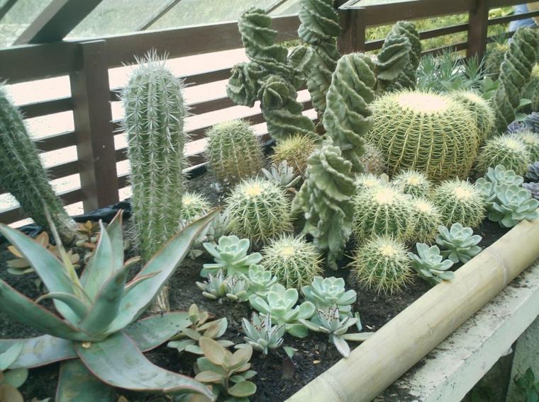 Κήποι με κάκτους8
