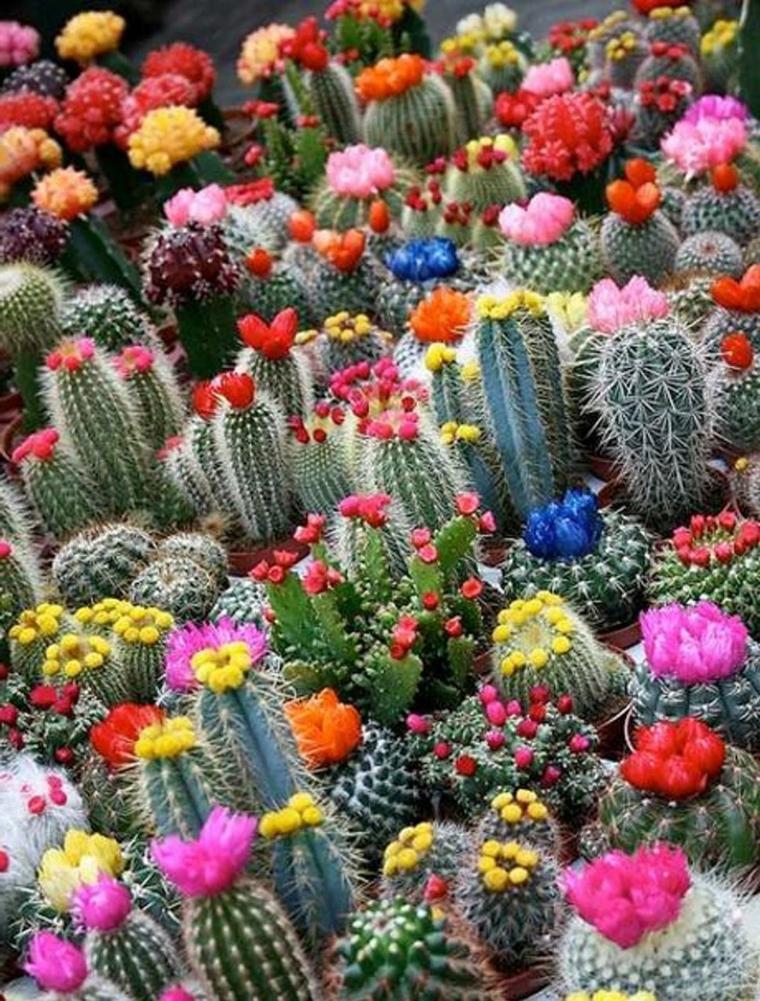 Κήποι με κάκτους9
