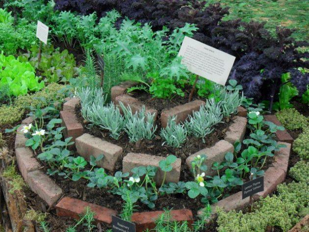 σπιράλ σχέδια κήπου8