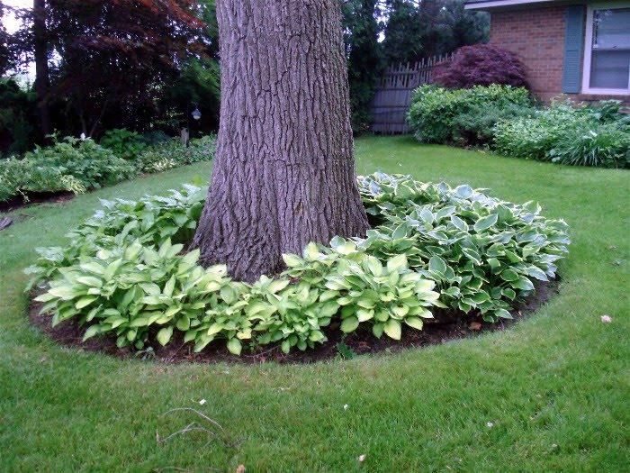 παρτέρια γύρω από δέντρα1