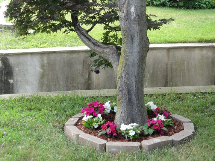παρτέρια γύρω από δέντρα6