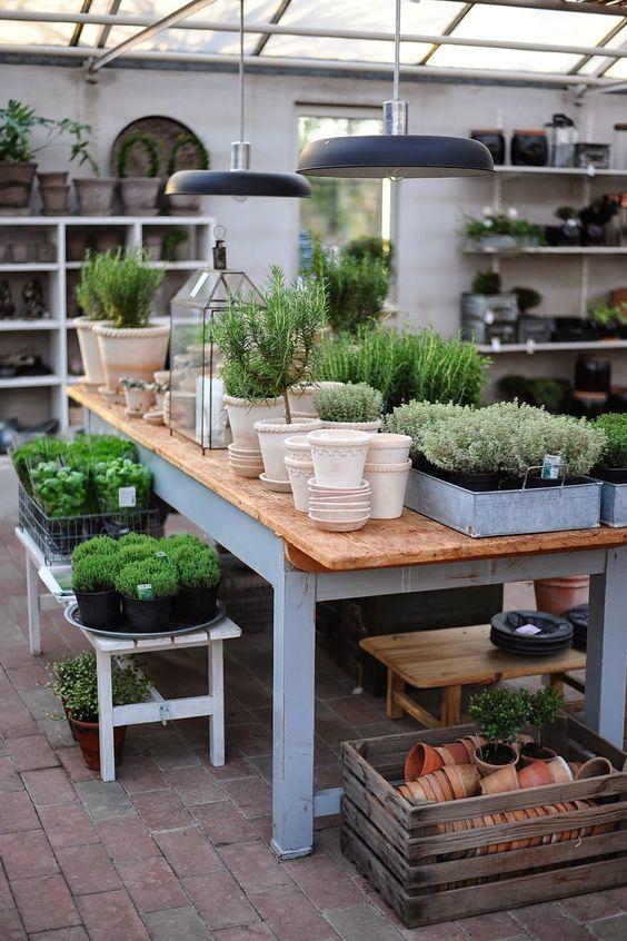 θεραπευτική γωνιά με φυτά17