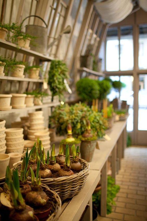 θεραπευτική γωνιά με φυτά20
