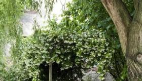 Μυστικοί Κήποι11