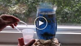 ενυδρείο από πλαστικό μπουκάλι1