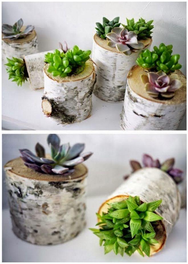 κούτσουρα και κορμούς σε όμορφές DIY γλάστρες2