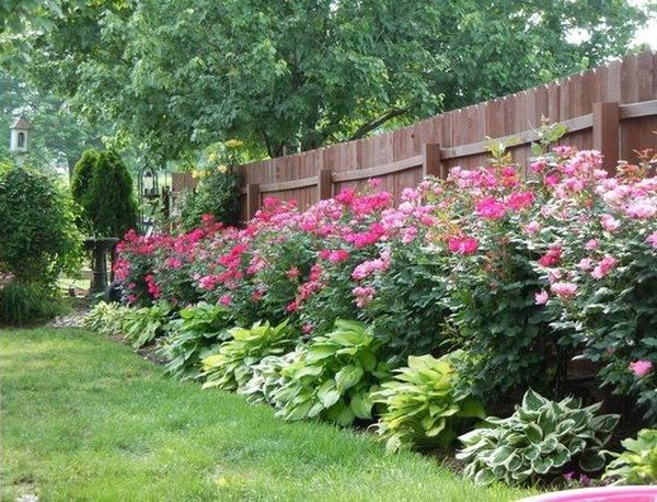 Άνοιξη, η τέλεια εποχή για να φυτέψετε λουλούδια11