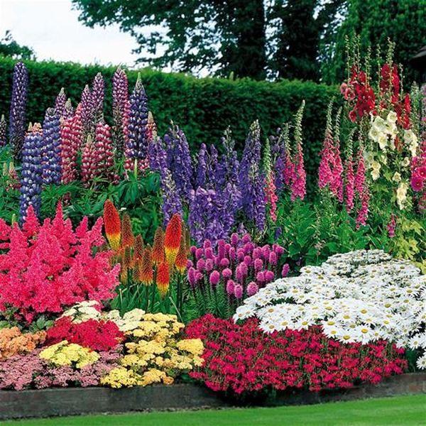 Άνοιξη, η τέλεια εποχή για να φυτέψετε λουλούδια12
