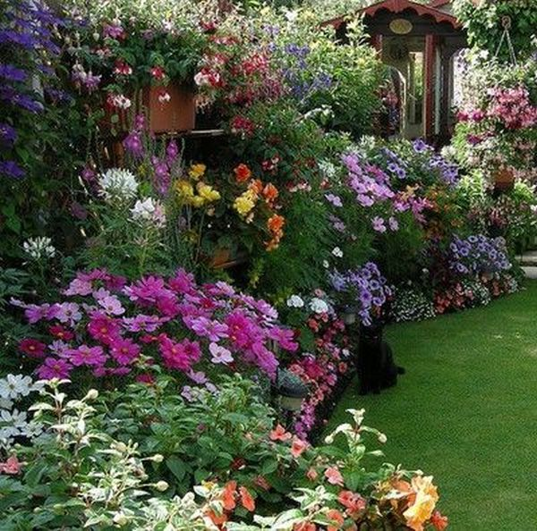 Άνοιξη, η τέλεια εποχή για να φυτέψετε λουλούδια14