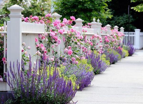 Άνοιξη, η τέλεια εποχή για να φυτέψετε λουλούδια2