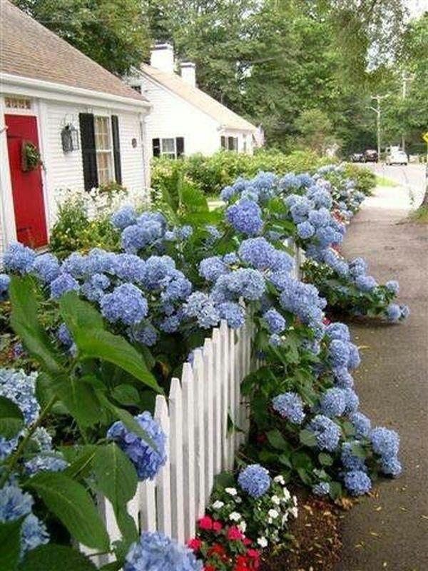 Άνοιξη, η τέλεια εποχή για να φυτέψετε λουλούδια6