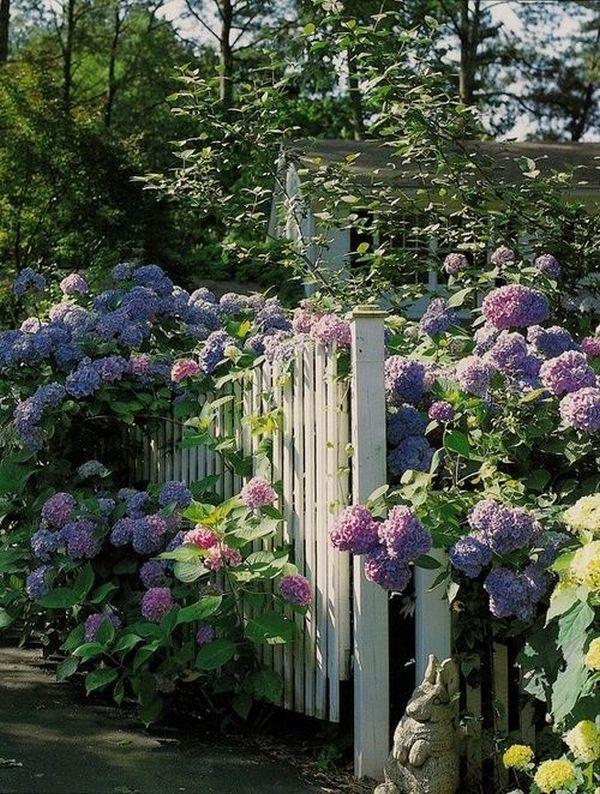 Άνοιξη, η τέλεια εποχή για να φυτέψετε λουλούδια8