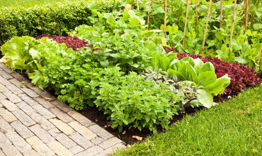 Ιδέες με Φανταστικούς λαχανόκηπους11