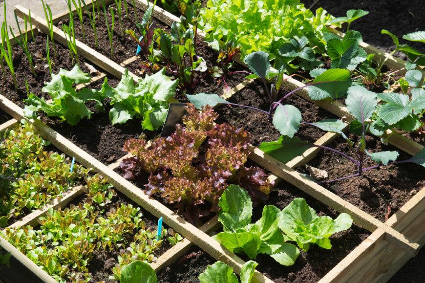 Ιδέες με Φανταστικούς λαχανόκηπους13