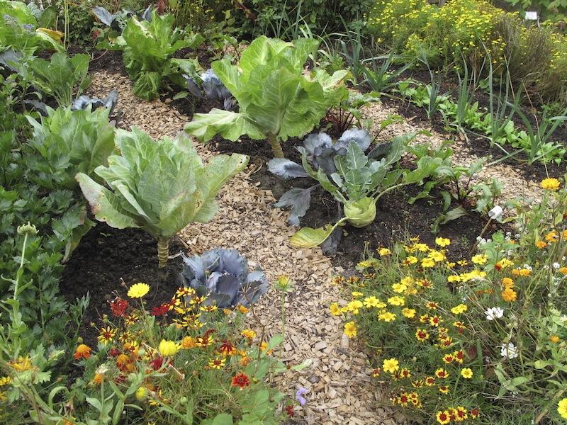 Ιδέες με Φανταστικούς λαχανόκηπους8