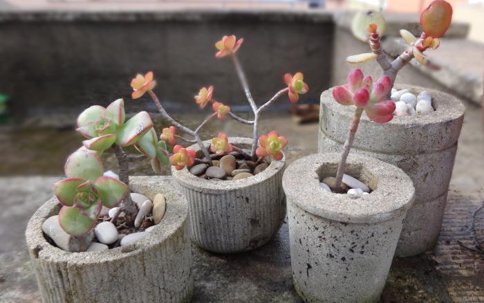 Μικρές DIY γλάστρες από τσιμέντο11